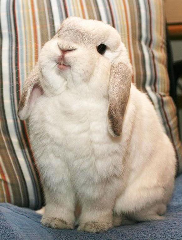 Smug-bunny-l